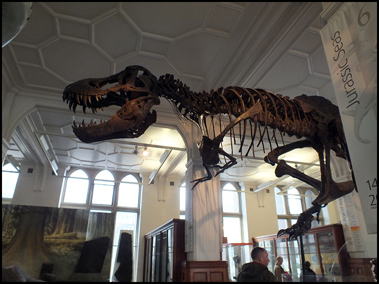 The museum's main attraction, a cast of 'Stan' the T-Rex